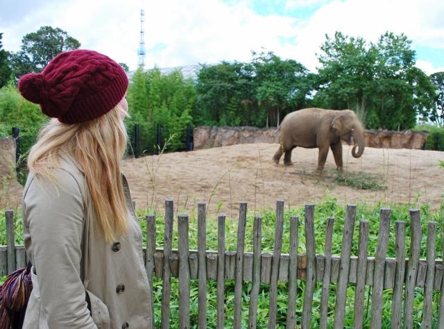 Little Miss Katy and an elephant at Dublin Zoo