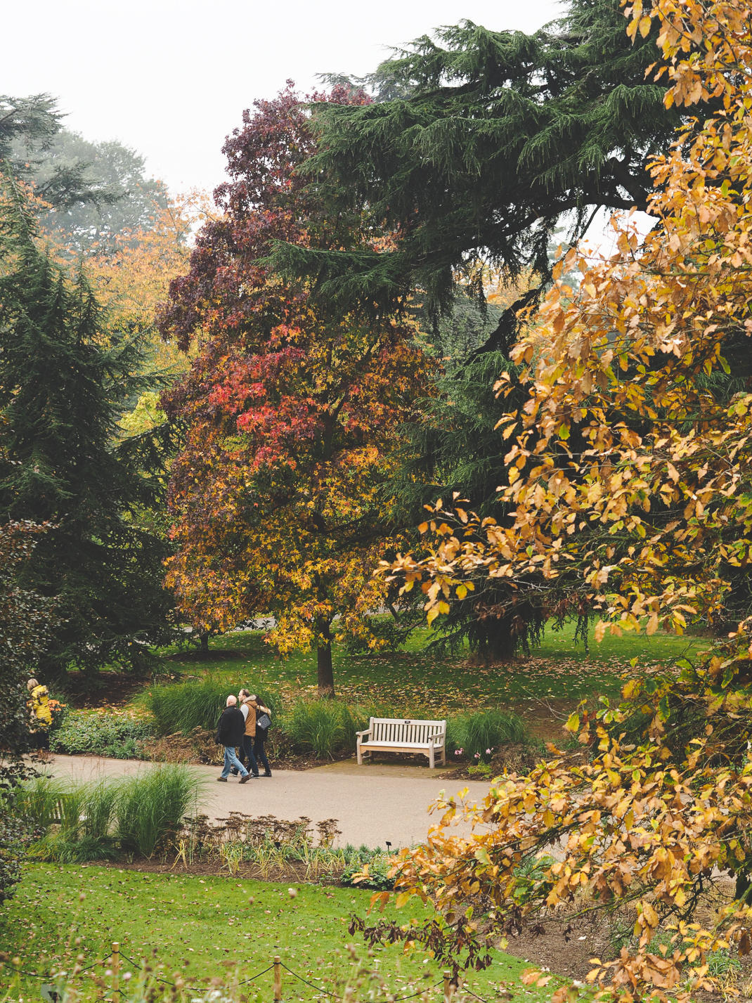 Colorful Autumn Leaves at Kew Gardens